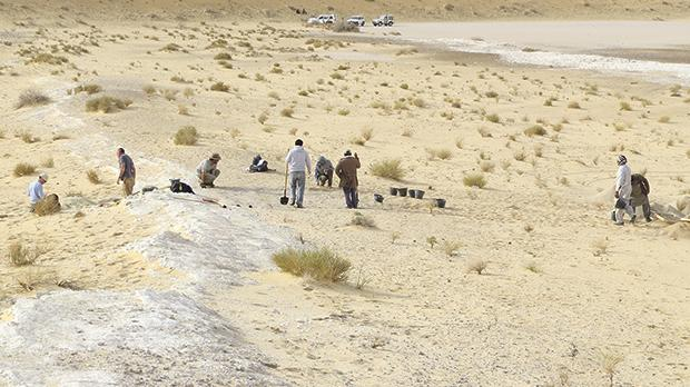 A general view of the excavations at the Al Wusta site. The ancient lake bed (in white) is surrounded by sand dunes of the Nefud Desert. Photo: Huw Groucutt
