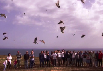 700 turtle doves released into the wild by hunters' federation