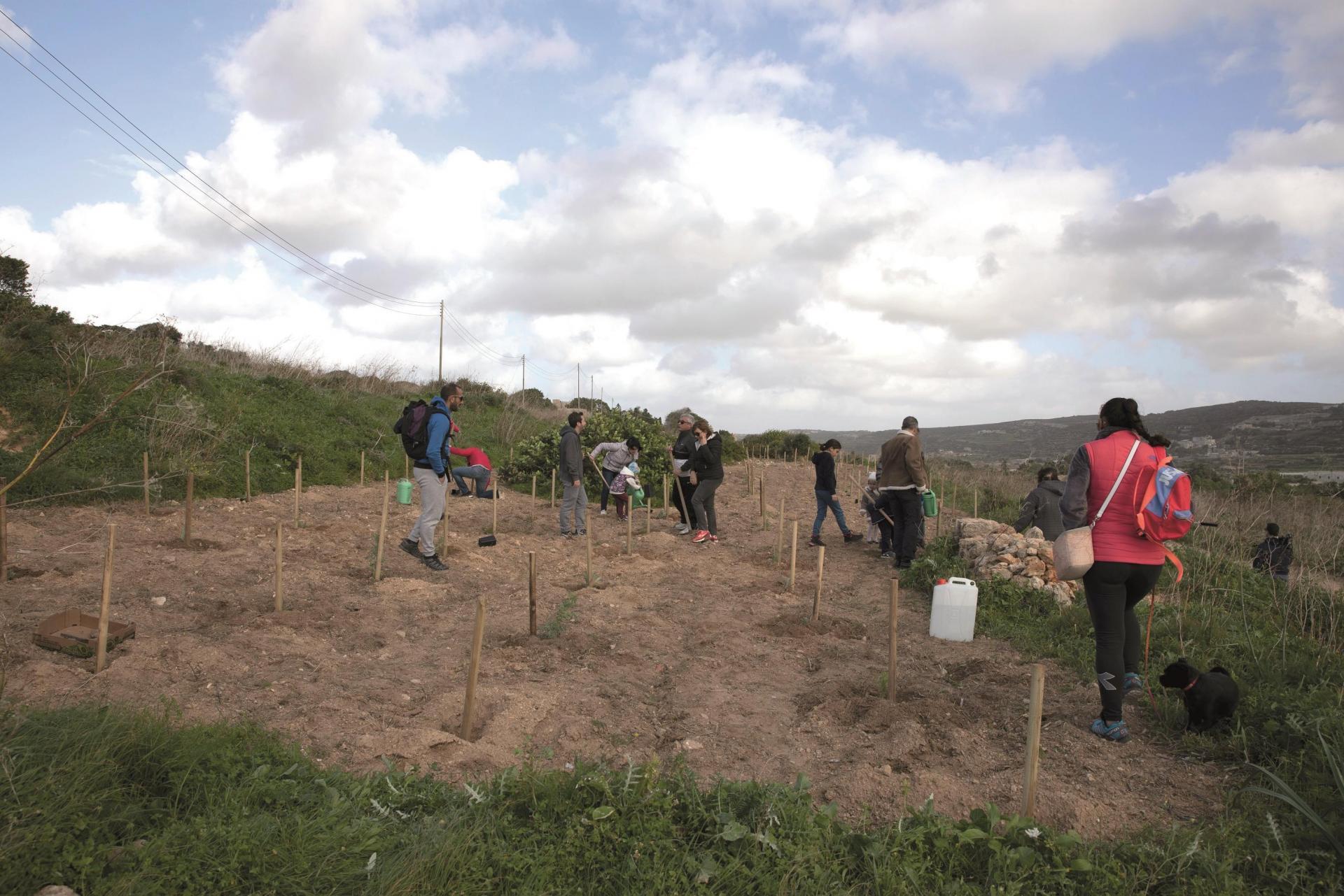 Planting at Majjistral.