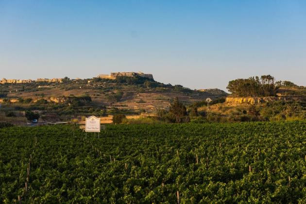 Drought dries up grape production