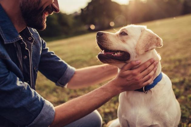 Watch: Responsible dog ownership