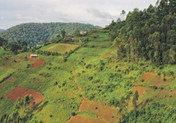 The landscape in Uganda is a rich, ever-changing green.