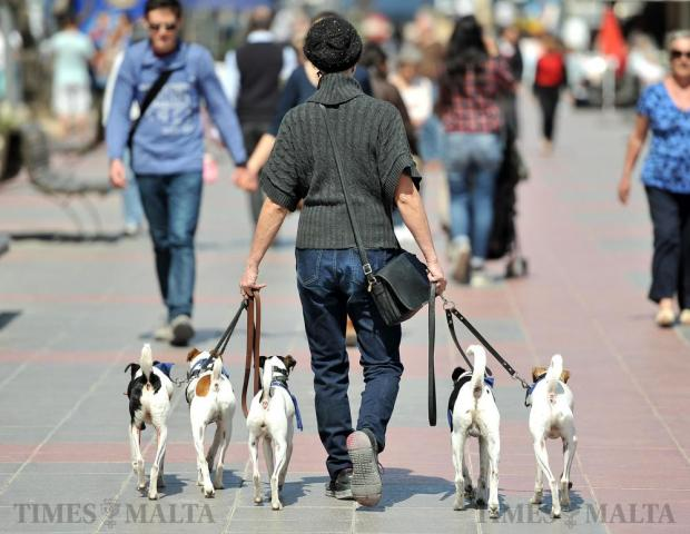 A woman walks her five dogs on the Sliema promenade on March 21. Photo: Chris Sant Fournier
