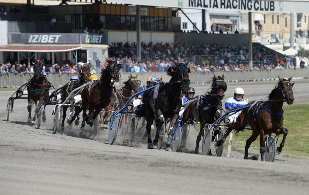 Trotters race across the Marsa Racetrack for the 13th meeting of the year. Photo: Matthew Mirabelli