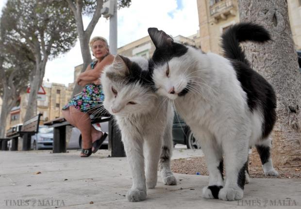 Cats brush each other at the Senglea waterfront on September 28. Photo: Chris Sant Fournier