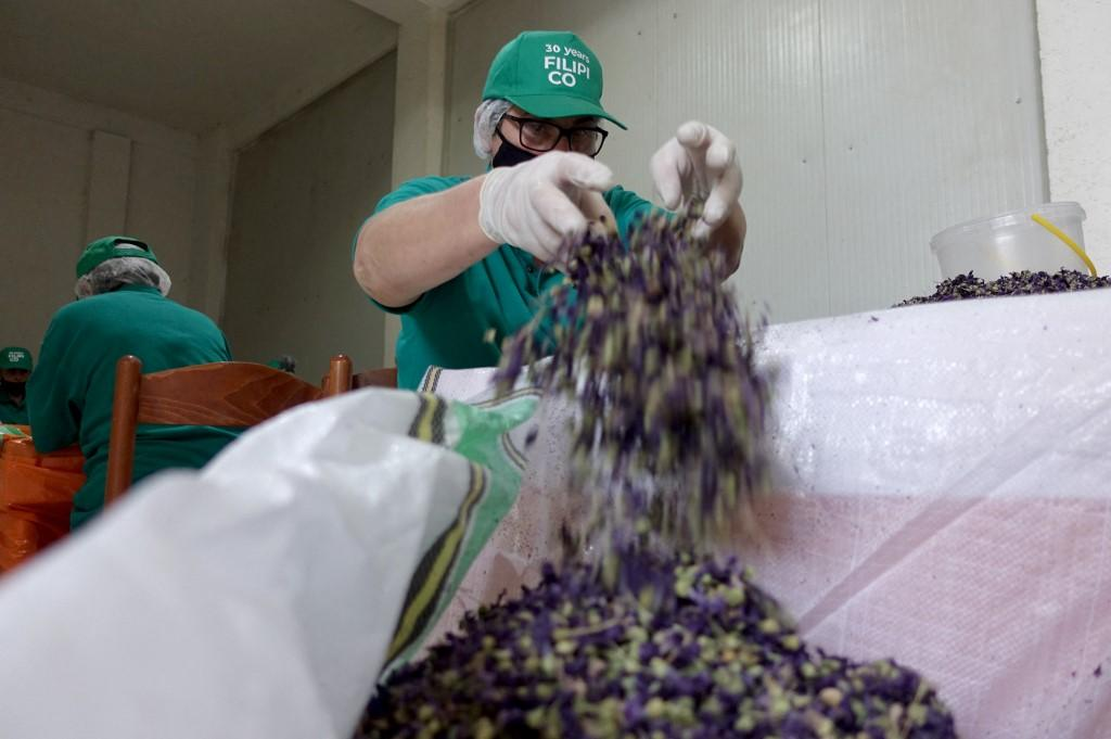A female worker cleans hollyhock before it is packaged for export in the Filipi Co factory in Lac.