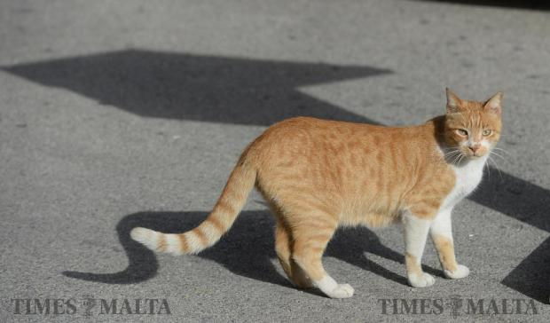 The resident cat at the Corradino Correctional Facility in Paola crosses the tarmac before a press conference on January 5. Photo: Matthew Mirabelli