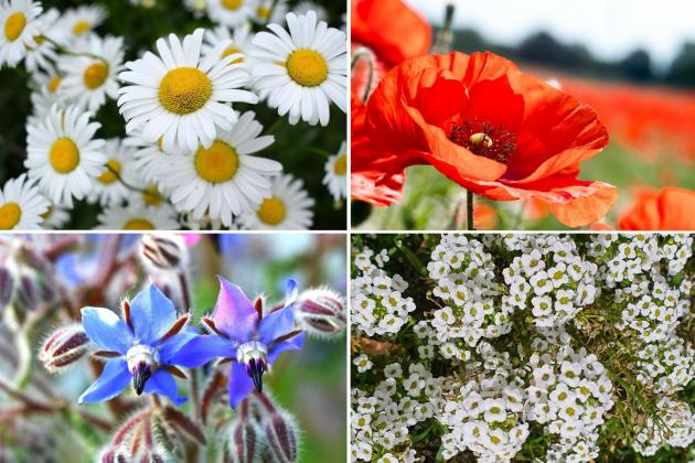 Wildflower seeds to be sent to all households this spring