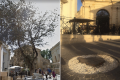 Upper Barrakka chopped down tree 'was dangerous to passers-by', authorities claim