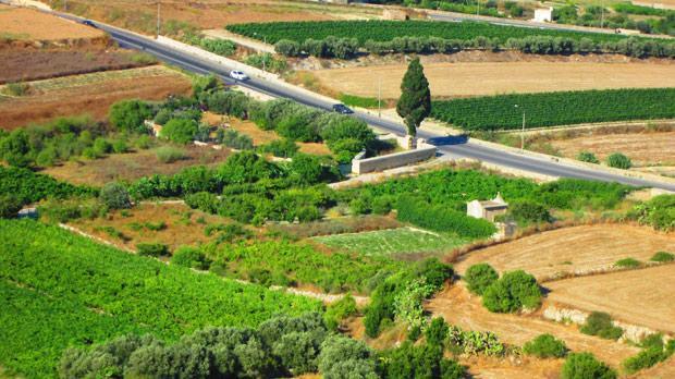 Fields seen from Mdina. Photo: Amy Mallia