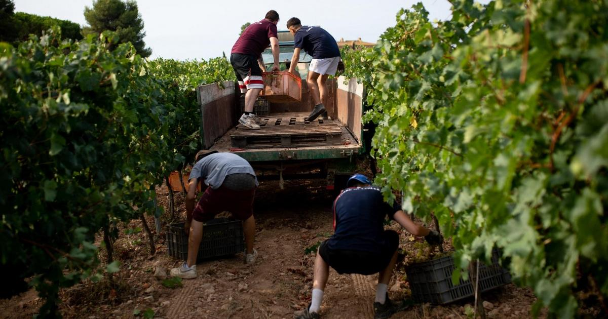Uphill Battle Spain S Wine Growers Adapt To Climate Change Ultime Notizie