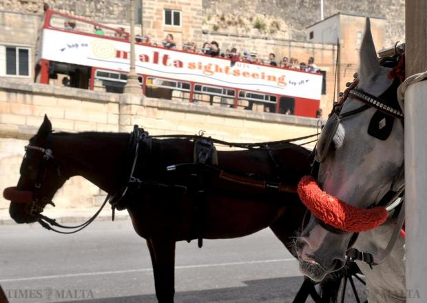 Horses at the Grand Harbour wait for their next trip on September 02. Photo: Chris Sant Fournier