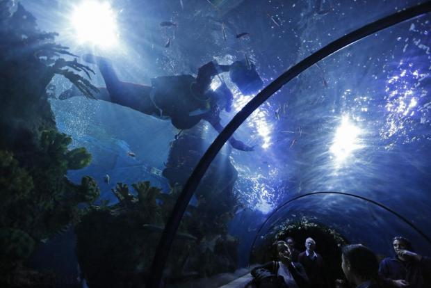 A diver dressed as Santa Claus swims inside a fish tank before feeding fish at the Malta National Aquarium in Qawra on December 22. Photo: Darrin Zammit Lupi