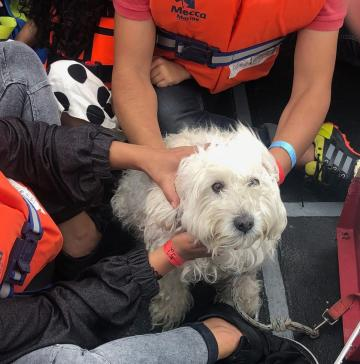 The dog rescued by Aquarius.
