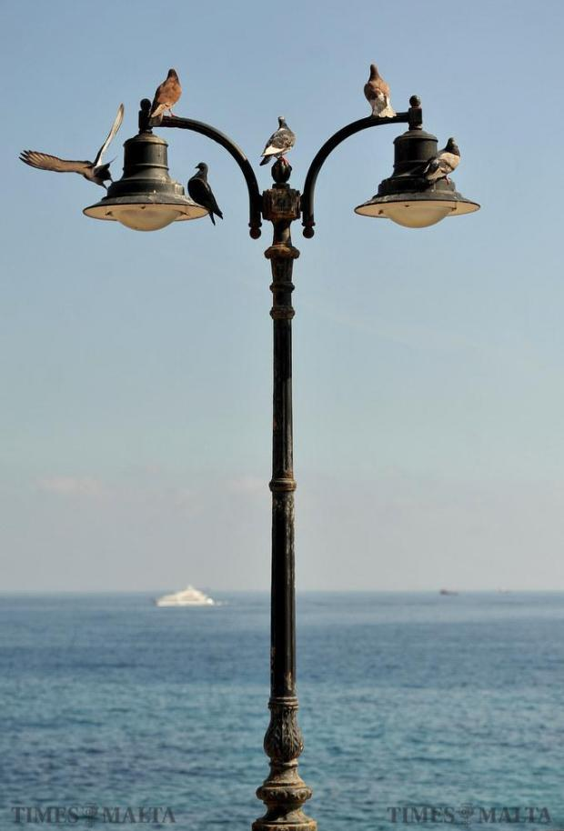 Pigeons perch themselves on top of a Sliema lamppost on February 16. Photo: Chris Sant Fournier
