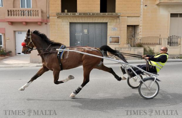 A horse and sulky race down Mons Mikel Azzopardi Street in Siggiewi on April 3. Photo: Chris Sant Fournier