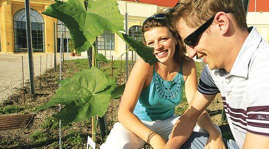 Visitors tour a vineyard, called Liesenpfenning like an 18th century wine, in the garden of Schoenbrunn Palace in Vienna.