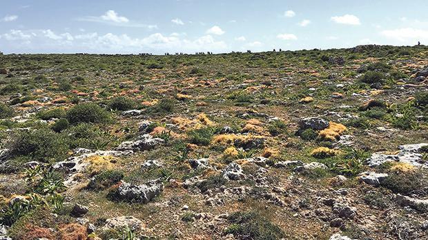 L-Aħrax tal-Mellieħa.