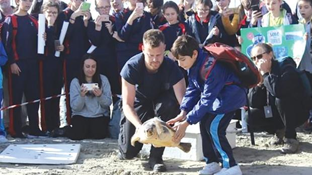An adopted turtle being released back to freedom.