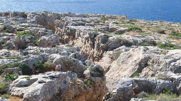 The garigue at Qlejgħa, home of wild thyme (sagħtar).
