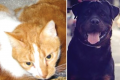 Cat attacked rottweiler first, claims dog's owner