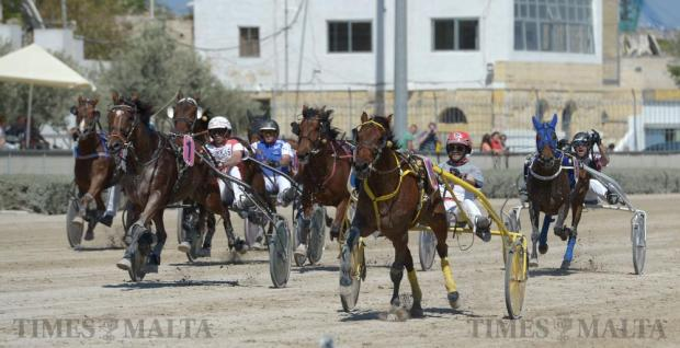 A trotting race gets underway at the Marsa racetrack on May 22. Photo: Matthew Mirabelli