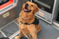 Sniffer dog overdoses while screening boat party passengers in Florida