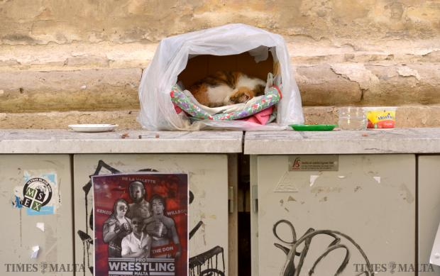 A cat curls up in a ball in his make shift home in Valletta on February 4. Photo: Matthew Mirabelli