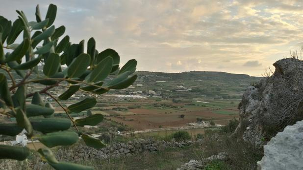 Maltese countryside. Photo: Steven Zarb