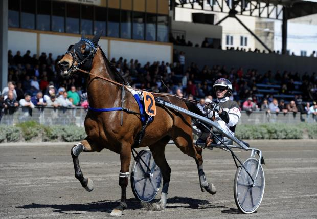 A horse gallops around the track before a race commences at the racetrack in Qormi on April 2. Photo: Steve Zammit Lupi