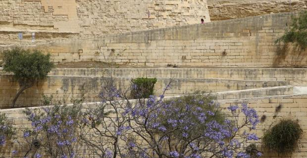 A lone commuter walks down the path leading from the Central Bank to the bus terminus in St James' Ditch in Valletta on May 12. The ditch used to be packed with cars until recent restoration works on the fortifications cleared the area of the eyesore. Photo: Darrin Zammit Lupi