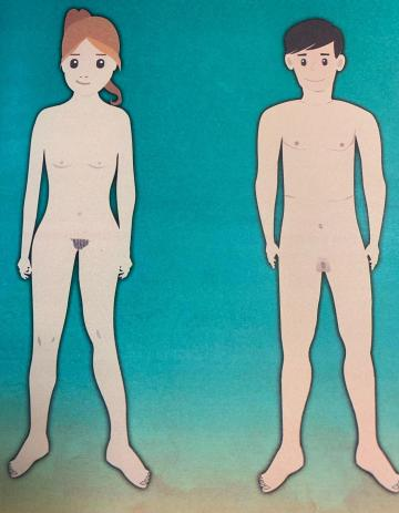 One of the images in the workbook which asks students to draw a circle around the parts of the body that change through sexual development.