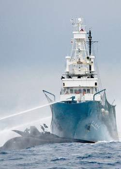 Crew of the Japanese ship Shonan Maru No. 2 sprays water at the Sea Shepherd Conservation Society's high-tech powerboat Ady Gil during a collision between the two vessels in the Southern Ocean. (Reuters)