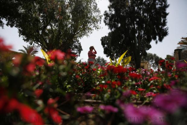 A tourist walks near flower beds on the first day of spring at the Upper Barrakka Gardens in Valletta on March 21. Photo: Darrin Zammit Lupi