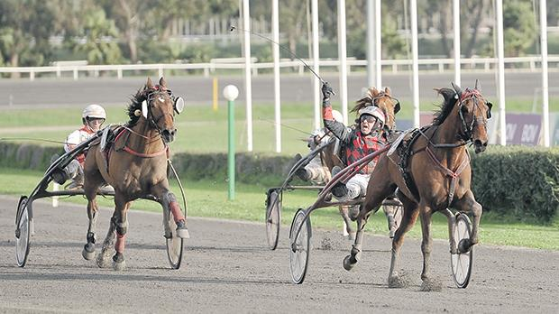 Marco Refalo steers Overtaker By Sib to victory inthe Malta Racing Champion Trotter for class Premier. Photo: Chris Sant Fournier