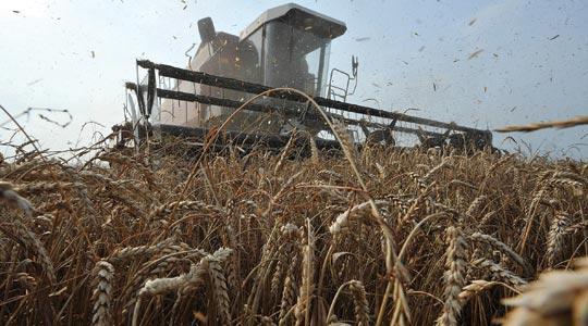 Australia slashes wheat forecast essay