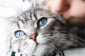 Pets: is it ethical to keep them?