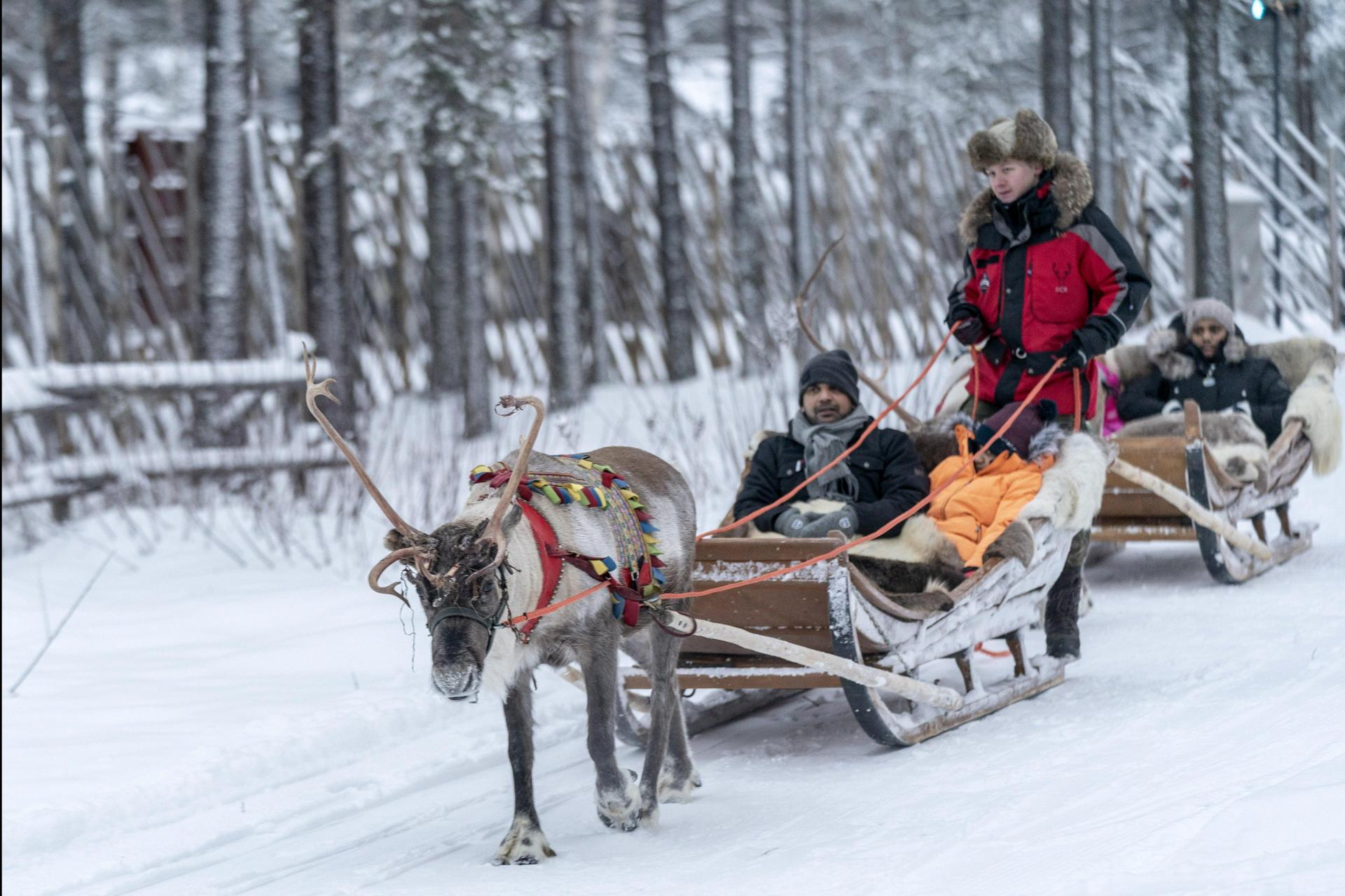 Tourists enjoy a reindeer ride organised by Santa's Reindeer company at Santa Claus Village.