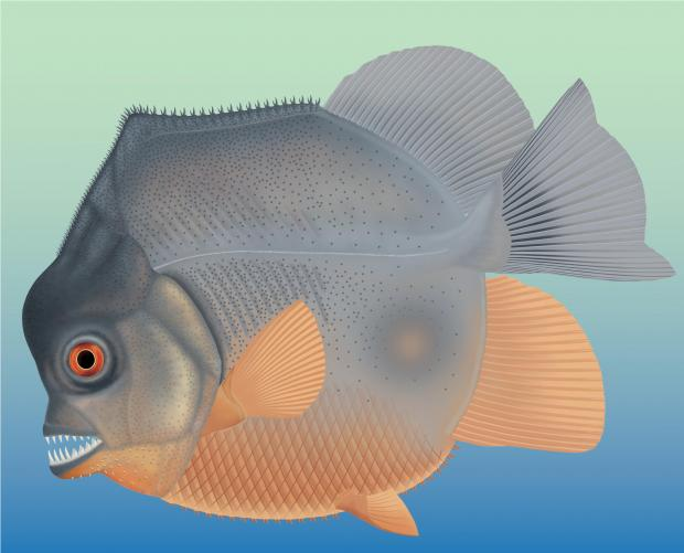 Artists' impression of the new species.