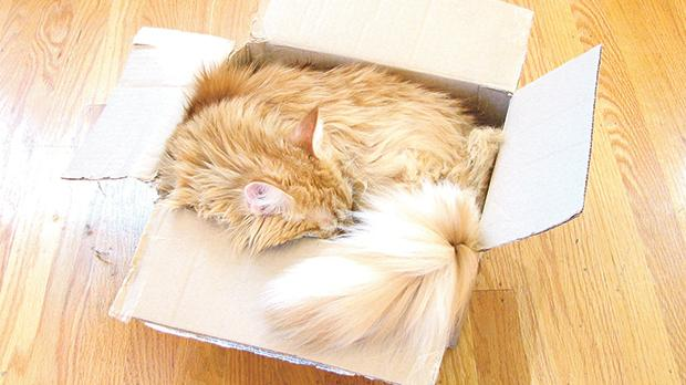 Cats can fit in the most improbable spaces! Photo: Windell Oskay, Flickr.com