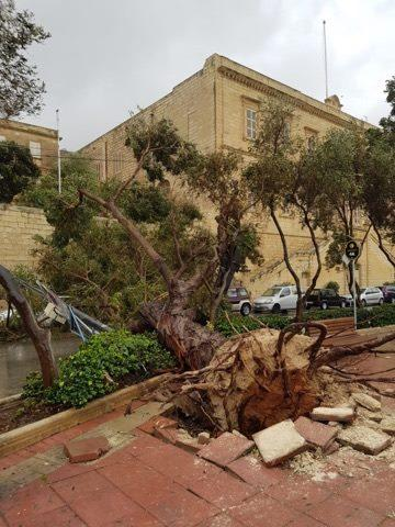 An uprooted tree along the Sliema front. Photo: Harry Briffa/Facebook