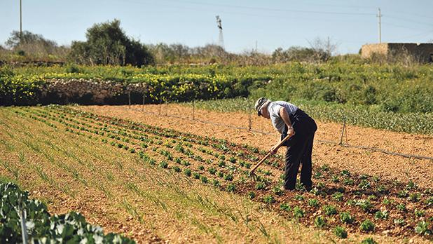 The number of Maltese full-time farmers has been steadily dwindling over the years. Photo: Chris Sant Fournier