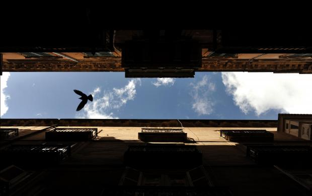 A pigeon flies through Strait Street in Valletta on March 14. Photo: Chris Sant Fournier