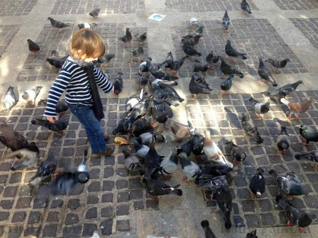 A child watches pigeons devour a cheesecake at the Upper Barrakka Garden in Valletta on February 15. Photo: Chris Sant Fournier