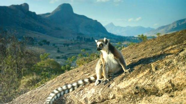 an analysis of madagascar the exotic island Move it for madagascar when four pampered animals from new york's central park zoo accidently find themselves shipwrecked on the exotic island of madagascar, they discover it really is a jungle out there.