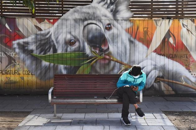 Koala row threatens leader of Australia's biggest state
