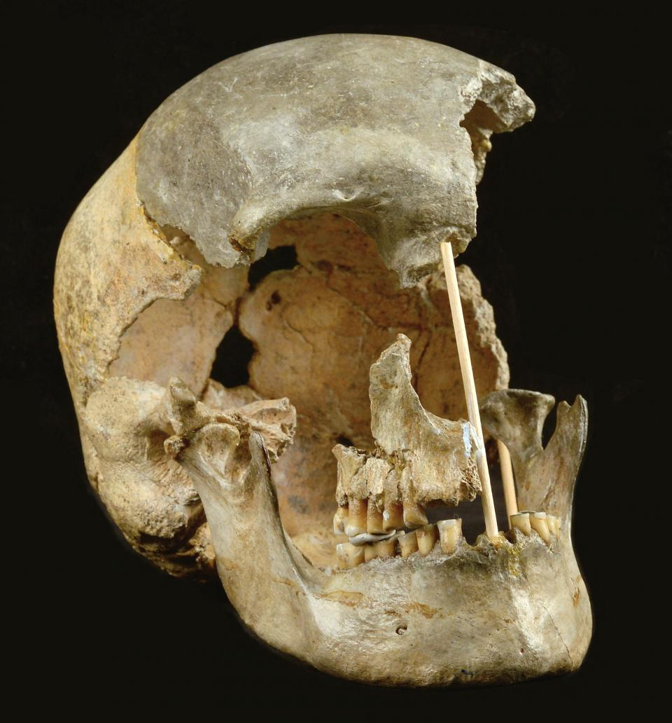 The skull of a modern human female individual from Zlaty kun. Photo: Martin Frouz/ Prague National Museum/AFP