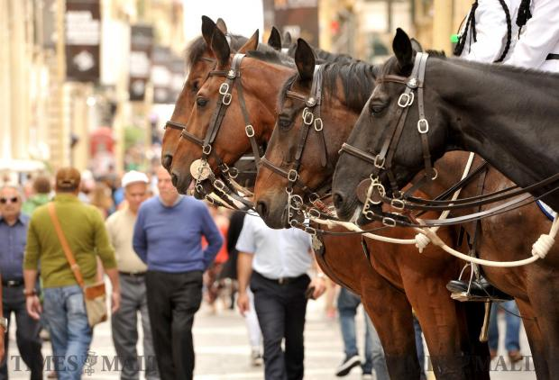 Horses pose for photos in Valletta on May 17. Photo: Chris Sant Fournier