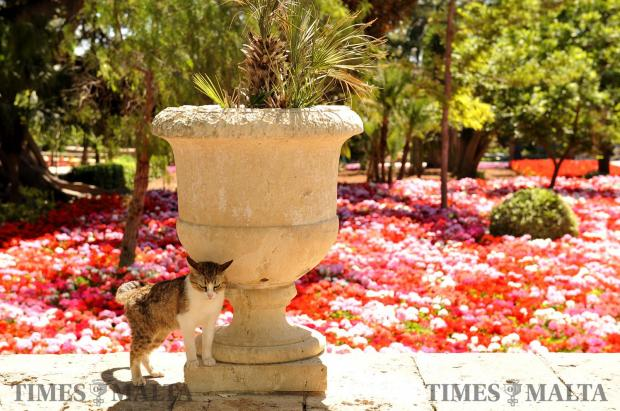 A San Anton resident cat ponders the meaning of life on May 22. Photo: Chris Sant Fournier