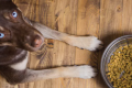 Vegan dogs: should canines go meat free?